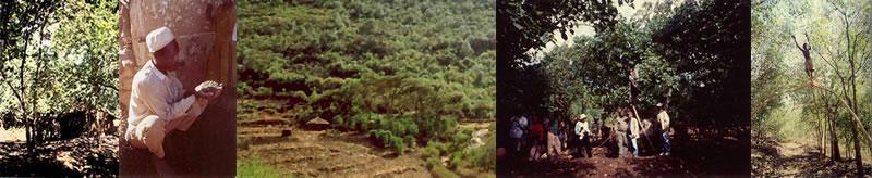 ジュルジェルツーのコーヒー農園写真